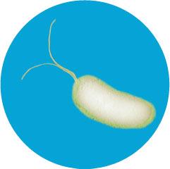 Электронная микрофотография бактерии