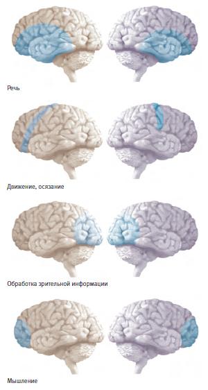 Функциональная магнитно-резонансная томография помогла выяснить, какие участки мозга задействованы в каких его функциях.