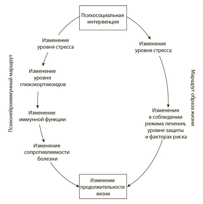 Психология стресса». Глава из книги • Р. Сапольски • Книжный клуб на  «Элементах» • Опубликованные отрывки из книг
