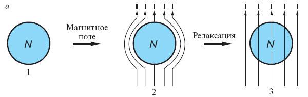 а— нормальный проводник, обладающий отличным от нуля сопротивлением при любой температуре(1), внесен в магнитное поле. Всоответствии с законом электромагнитной индукции возникают токи, которые сопротивляются проникновению магнитного поля в металл(2). Однако если сопротивление отлично от нуля, они быстро затухают. Магнитное поле пронизывает образец нормального металла и практически однородно(3)