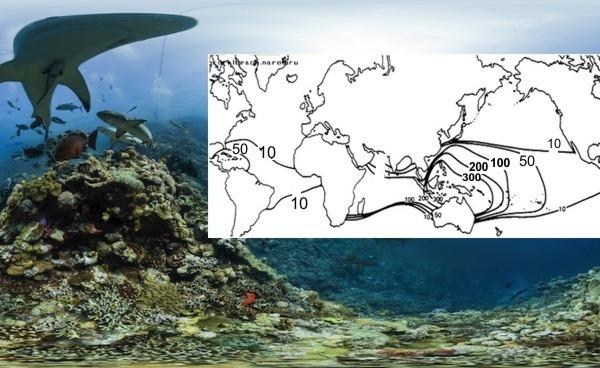 Многие рифо-строящие кораллы
