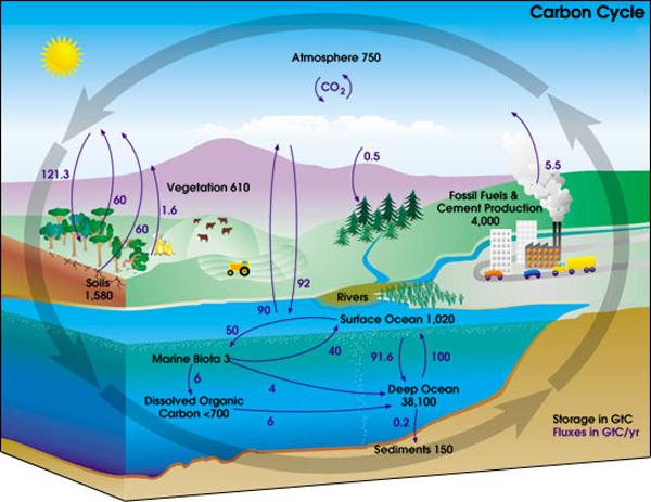 Цикл углерода. Схема с сайта