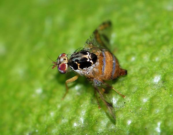 Пептиды модифицированные комары стероиды видео ютуб