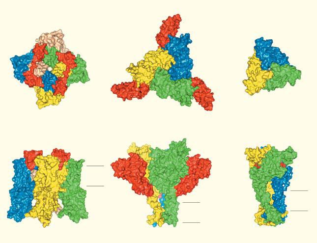 Рис. 3. Пространственная организация болевых рецепторов («Природа» №12, 2016)