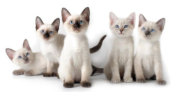 Кошки для небольшой квартиры