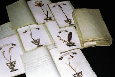 Первый русский гербарий, собранный лейб-медиком Петра Великого Робертом Карловичем Арескиным