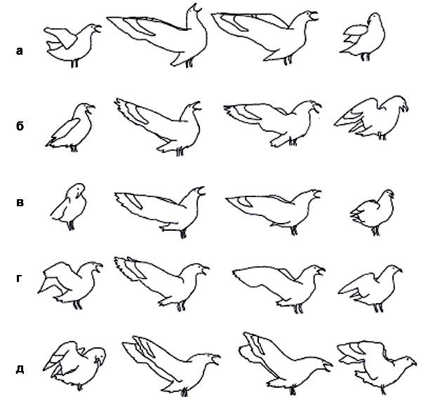 Рис. 3. ... и бурого поморника (а—д— разные птицы, прорисовки по кадрам фильмов). Индивидуальная изменчивость неуничтожает общевидового облика демонстрации. Изображение: «Химия и жизнь»
