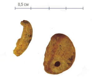 Фаланга мизинца древнего человека, обнаруженная в Денисовой пещере