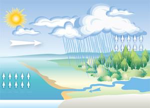 Наземная растительная биота, её девственные леса вносят решающий вклад в привлечение океанской влаги в глубину континентов, поддерживая оптимальный для жизни гидрологический режим суши. Подробнее см. «Наука и жизнь» № 9, 2008г., с.2. Изображение: «Наука и жизнь»