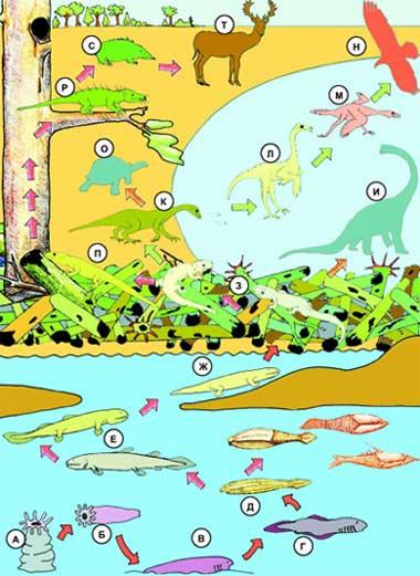 ...З,П - возникновение амфибий и рептилий; К–Н - формирование птиц в водной среде; П–Т - появление млекопитающих в...