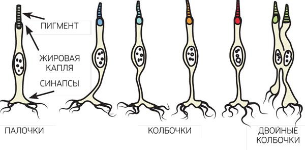 http://elementy.ru/images/eltpub/eti_diagnosty_nastoyashie_zveri_02_600.jpg
