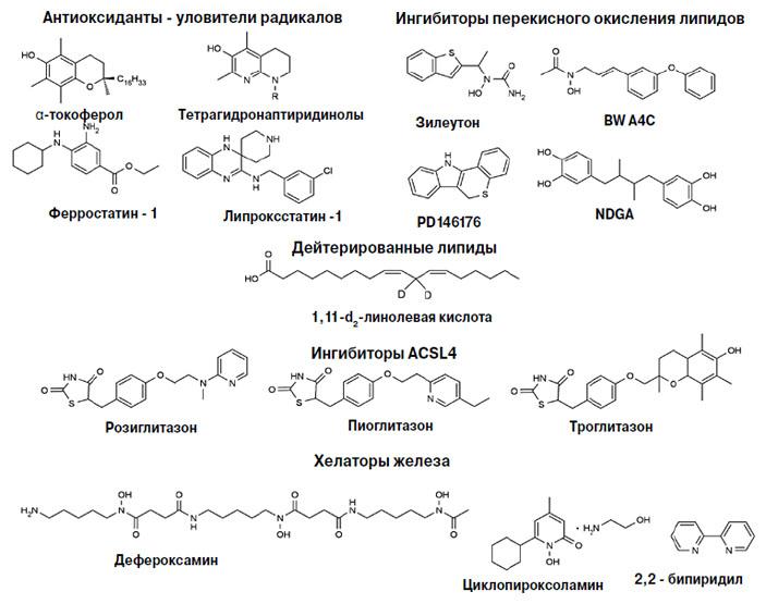 Рис. 6. Ингибиторы ферроптоза («Химия и жизнь» №10, 2018)