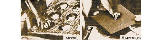 Обезьяна в возрасте одного месяца для того, чтобы взять крупный предмет из крупной ячейки, использует все пальцы на руке. Та же самая обезьяна через девять месяцев способна без труда взять даже маленький объект уже лишь двумя пальцами- большим и указательным. Такой прогресс в развитии тонких движений пальцев происходит благодаря прорастанию отростков (аксонов) нейронов коры больших полушарий к нейронам спинного мозга, напрямую контролирующим мышцы пальцев. Фотографии взяты из статьи: KypersH.G.J.M. Progress in Brain Research, 1982, v.52, pp.381-401 (слюбезного разрешения издательства Elsevier, 2006год) (фото из журнала `Наука и жизнь`)