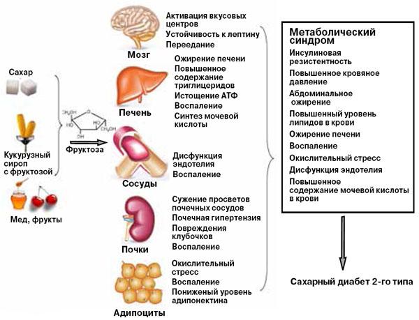 Рис. 3. Возможное влияние избытка фруктозы на здоровье («Химия и жизнь» №3, 2016)
