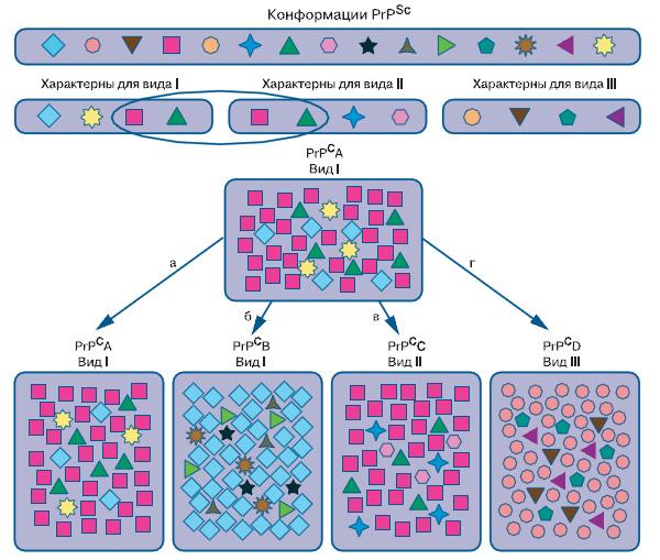 Альтернативные формы прионного белка