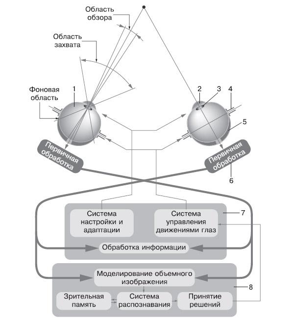 Схема зрительного анализатора