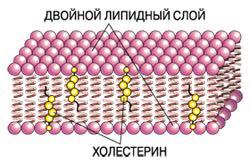 http://elementy.ru/images/eltpub/holest4.jpg