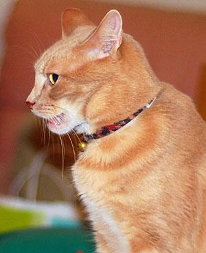 Наглые морды котят - YouTube | 368x300