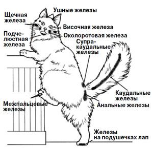 koshachya_himiya_04_300.jpg