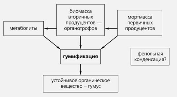 Упрощенная схема гумификации.