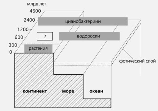 Рис.3. Схема соотношения эпох и экосистем с доминирующими продуцентами.  Влажные участки суши сначала заселяли...
