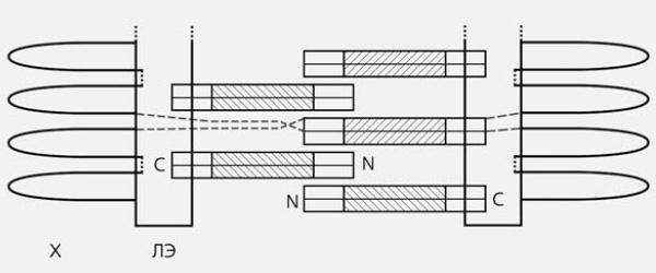 Рис.4. Схема строения центрального пространства синаптонемного  комплекса. X— петли хроматина, ЛЭ— латеральный элемент, N и С— концы  молекул белка SCP1. Центральная, α-спиральная часть молекул белка  показана штриховкой. Димеры из параллельно уложенных молекул SCP1  образуют зубцы «застежки-молнии». Изображение: «Природа»