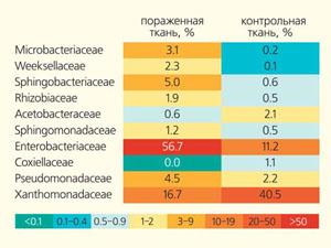 Рис. 1. Тепловая карта, представляющая основные доминирующие семейства бактерий в коре и материале ходов короедов («Природа» №2, 2019)
