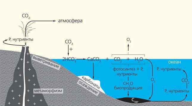 Рис. 5. Цикл углерода («Природа» №6, 2019)
