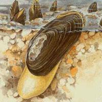a toxoplazma a parazitáról szól)