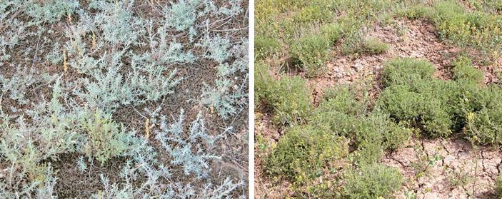 Поверхность почвы в заповеднике и на пастбище («Природа» №11, 2018)