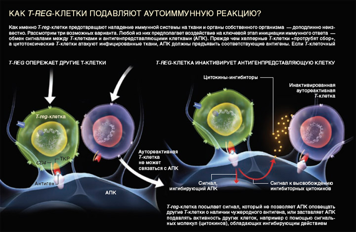 Реакция Иммунная фото