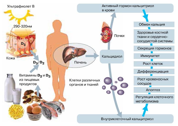почему организм не реагирует на грибковых паразитов