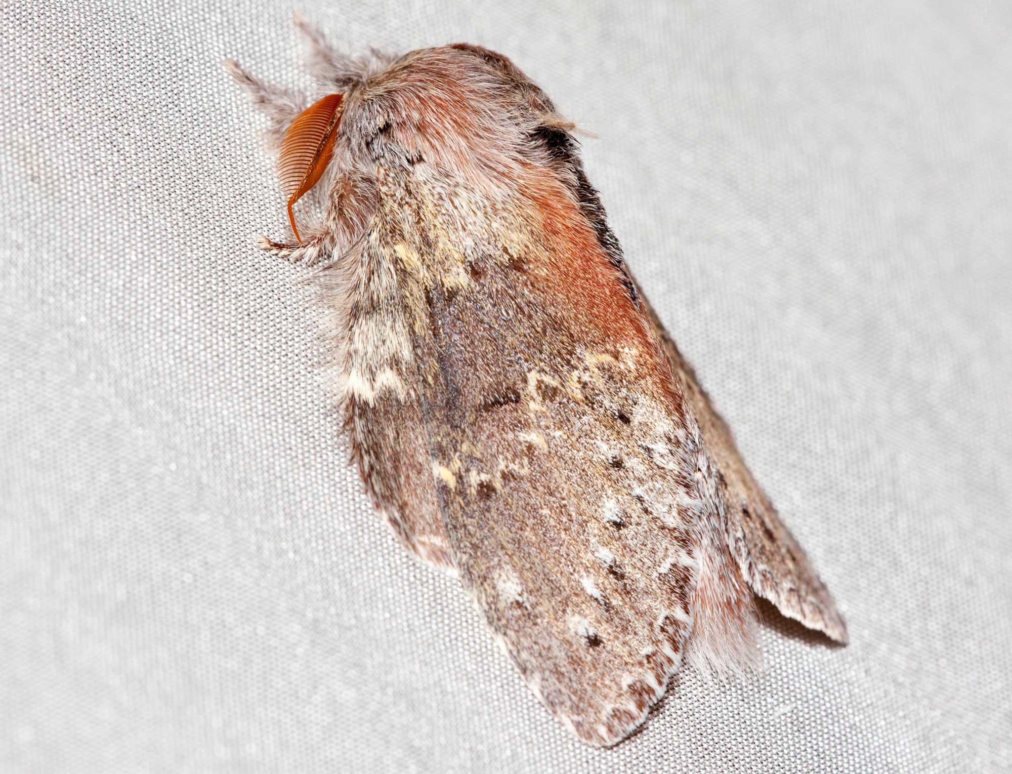 Ночные бабочки на ночь 14—15-я линии ВО индивидуалки спб м ладожская