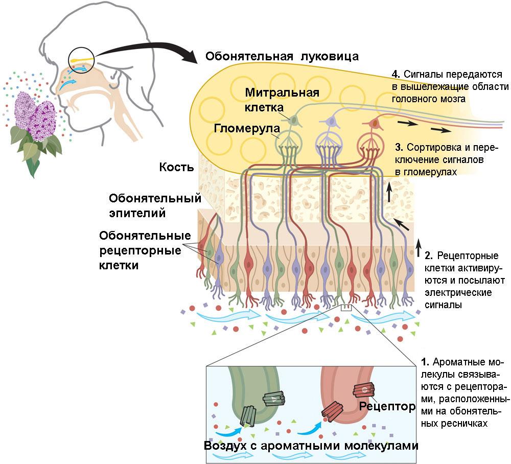 микроскопические насекомые паразиты на теле человека