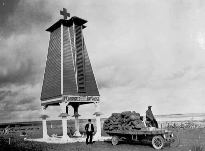 В 1918 году урожай гуано летучих мышей на озере Митчелл составил более 1800 кг. На фото — Чарльз Кэмпбелл отправляет телегу, груженную удобрением, на рынок. Фото с сайта expressnews.com