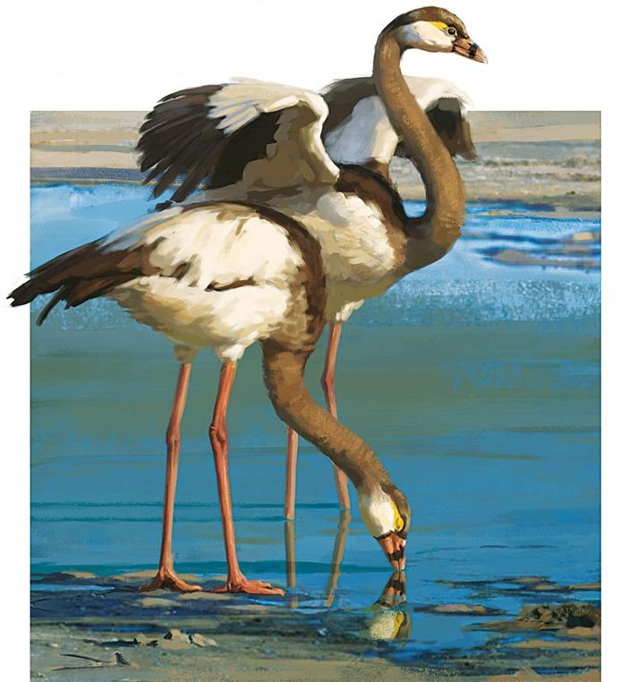 Палелодусы (Palaelodussp.)— предполагаемые предки фламинго и поганок