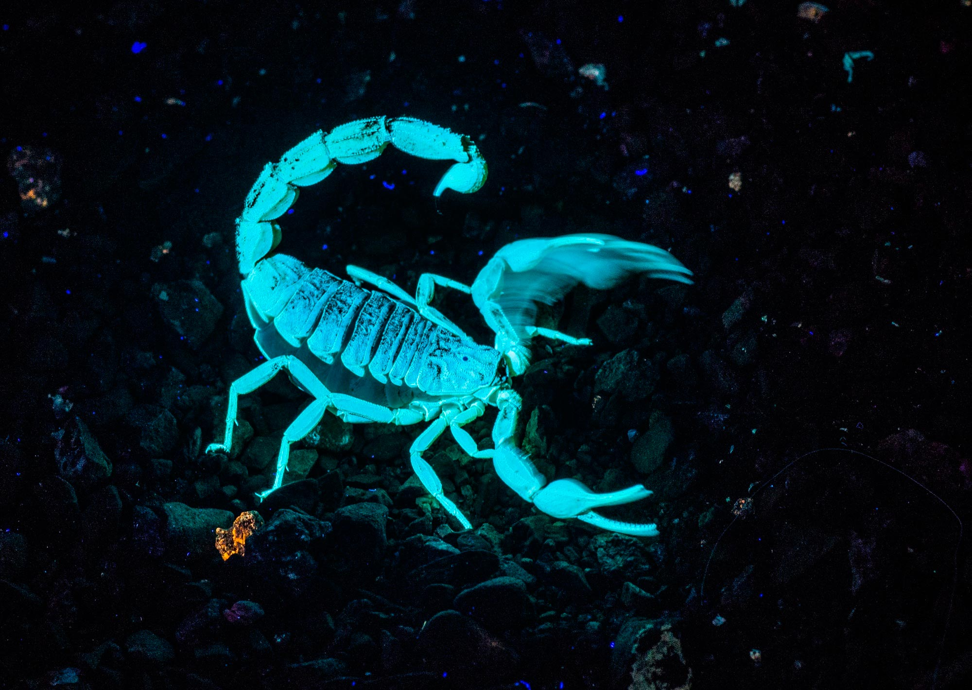 Картинки по запросу Скорпион