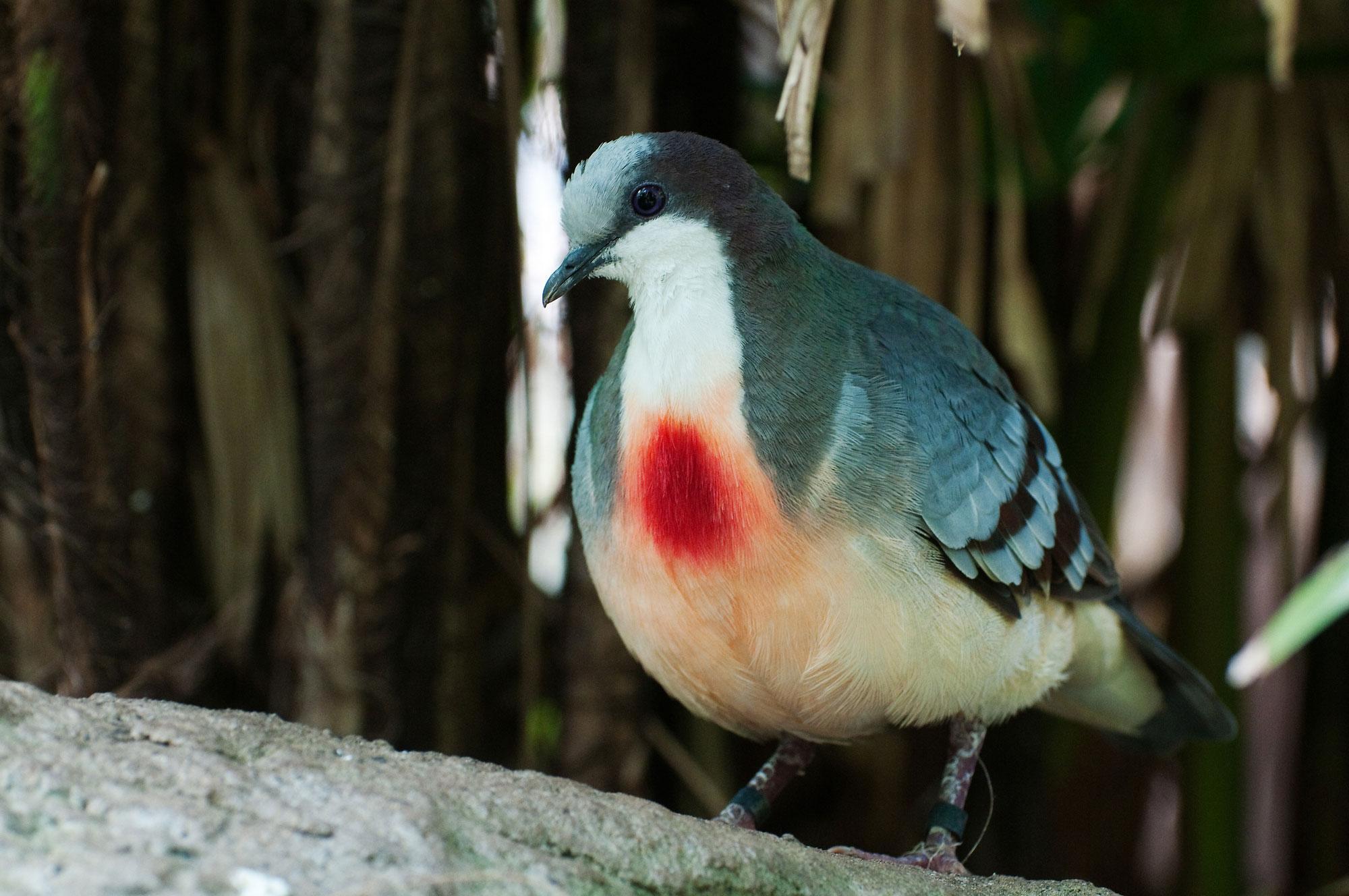 теперь вашей подстреленная птица картинки вас сделаем
