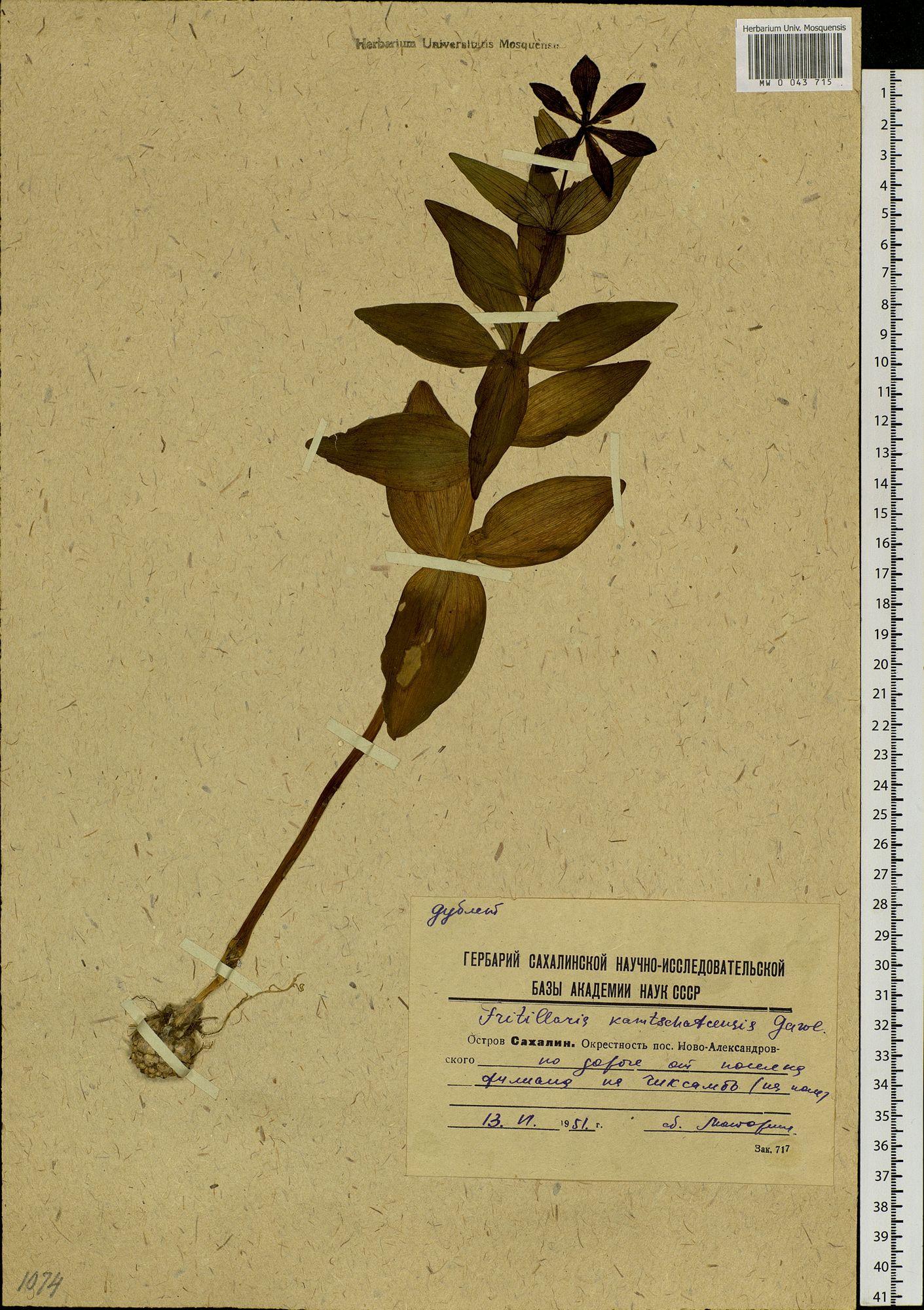 сам пожарил названия растений с фотографиями для гербария ушки