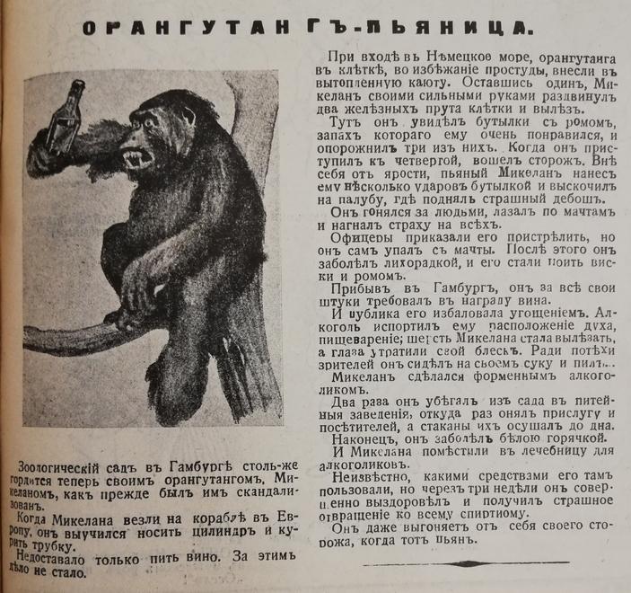Статья об орангутане