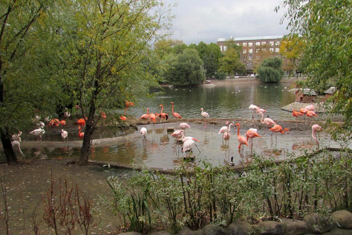 Фламинго на пруду