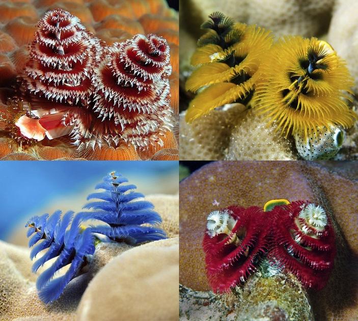 Картинки по запросу «Новогодняя ёлка» михневич зоология