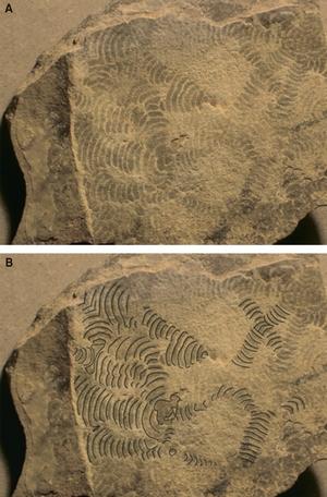 Palaeopascichnus
