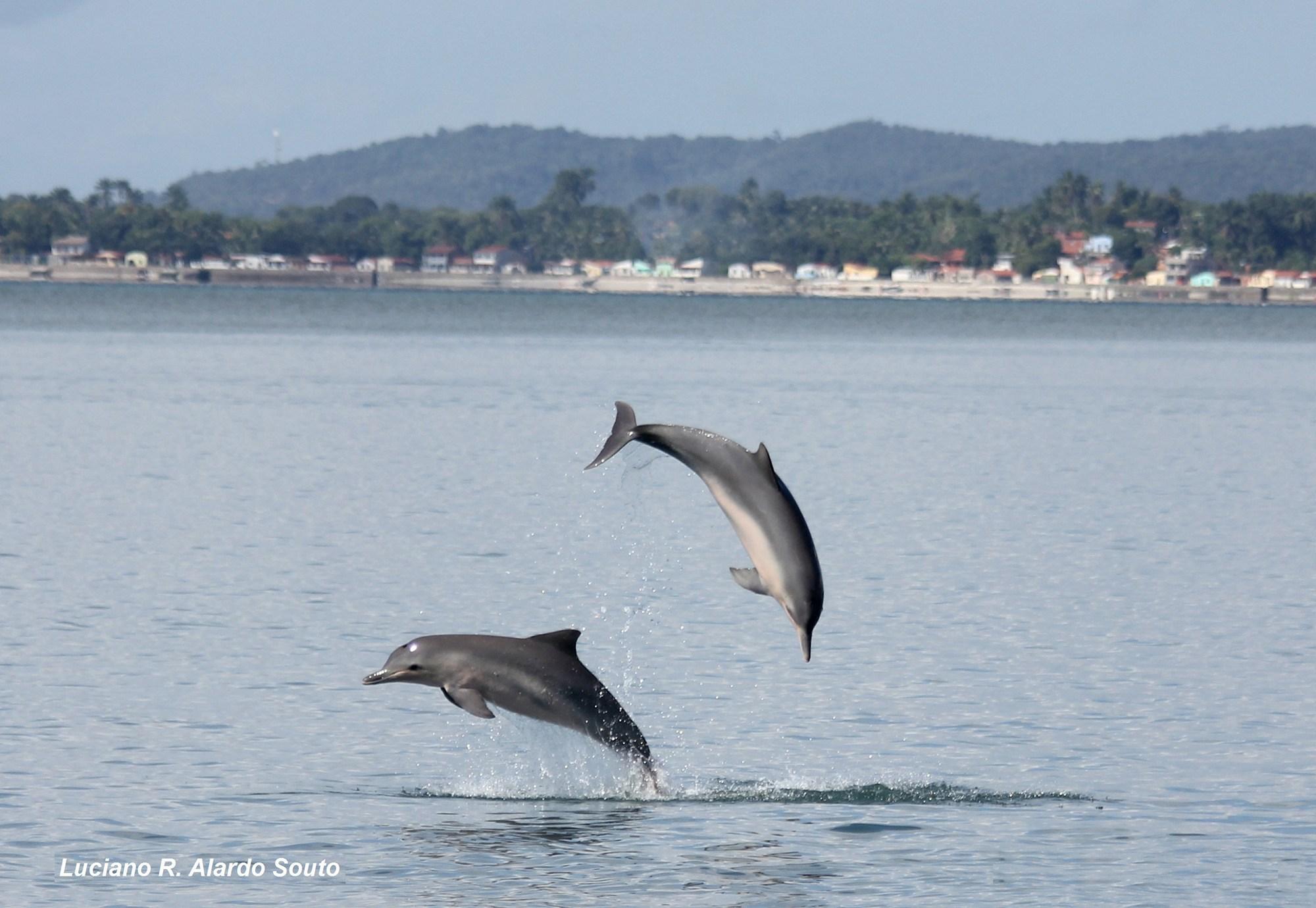 видео схема механизма дельфин