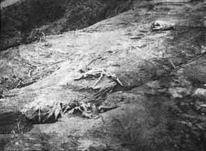 Останки морских птиц, погибших при извержении вулкана Барсена