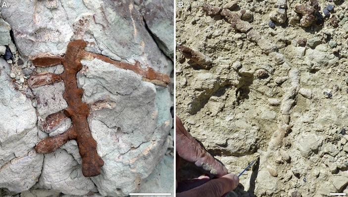 В Патагонии найдены подземные гнезда древнейших пчел