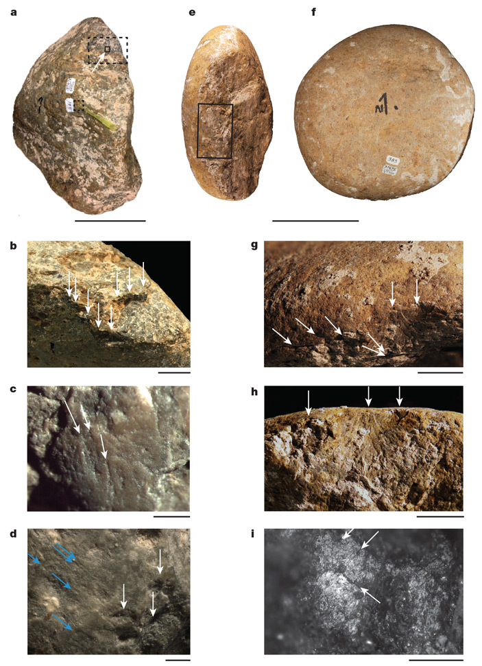 Камни, которыми предполагаемые древние американцы раскалывали кости мастодонта