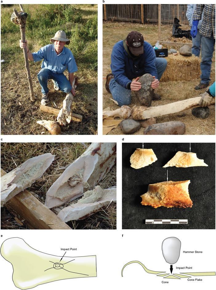 Рис. 2. Опыты по раскалыванию камнями современных слоновьих костей