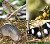 Очертания видового ареала определяются экологическими свойствами вида