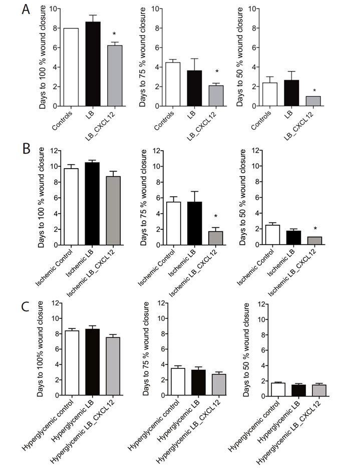 Рис. 3. Ускорение заживления ран мышей при обработке лактобактериями